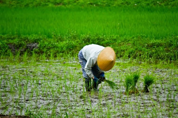 農業の6次産業化とは一体どうい...