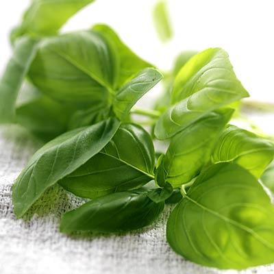 herb-basil-400x400