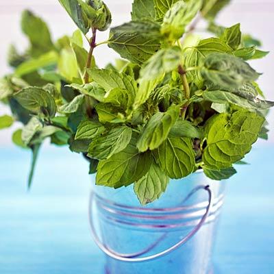 herb-mint-400x400