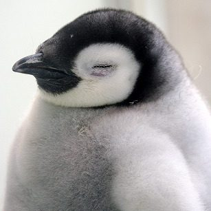 pppenguin