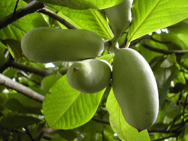 fruits-2