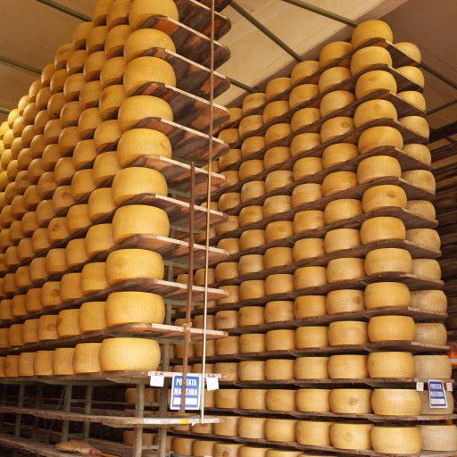 チーズ工場貯蔵庫