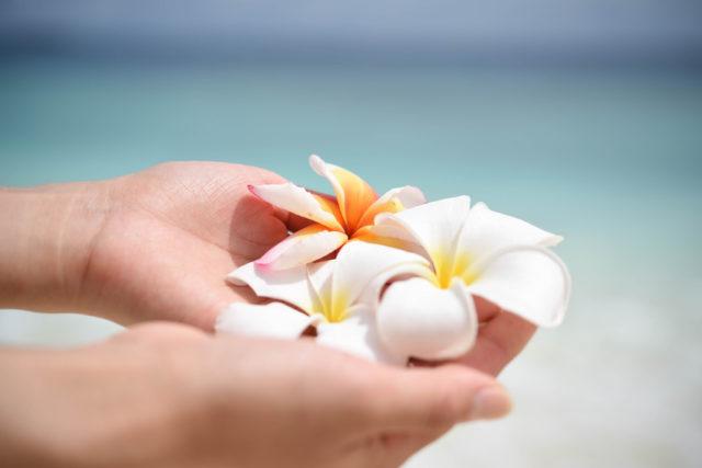 海をバックに手の上にプルメリアの花を持っている画像