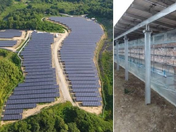 """太陽光発電パネル(左)の下で、キクラゲを栽培する""""ソーラーシェアリング"""""""