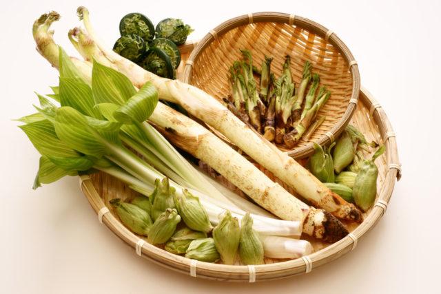 数種類の山菜がかごに盛られている写真