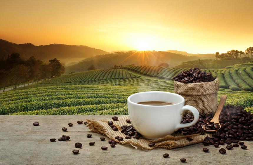 畑をバックに珈琲の豆とカップに入ったコーヒーの画像