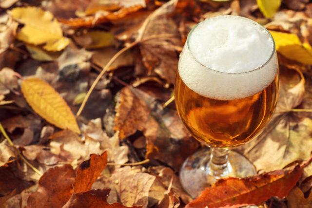 木の葉の上にビールが置かれている秋らしい画像