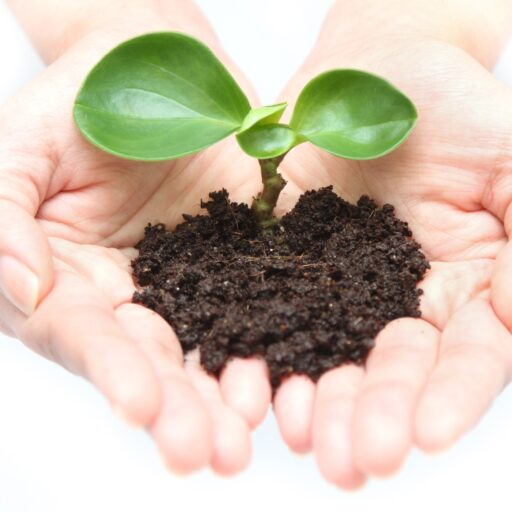 イメージ写真:手のひらでもちあげた植物の芽