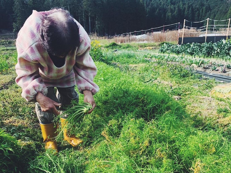 腰の曲がった体制で手にからし水菜を持った農家の徳岡さんの写真