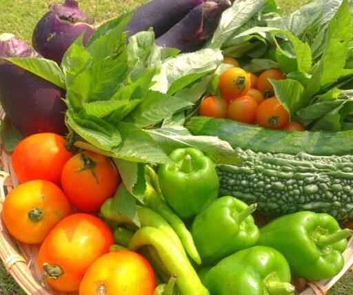 イメージ写真:積み上げられたたくさんの野菜たち。ゴーヤ、ピーマン、トマト、ナスなどたくさんの種類がある