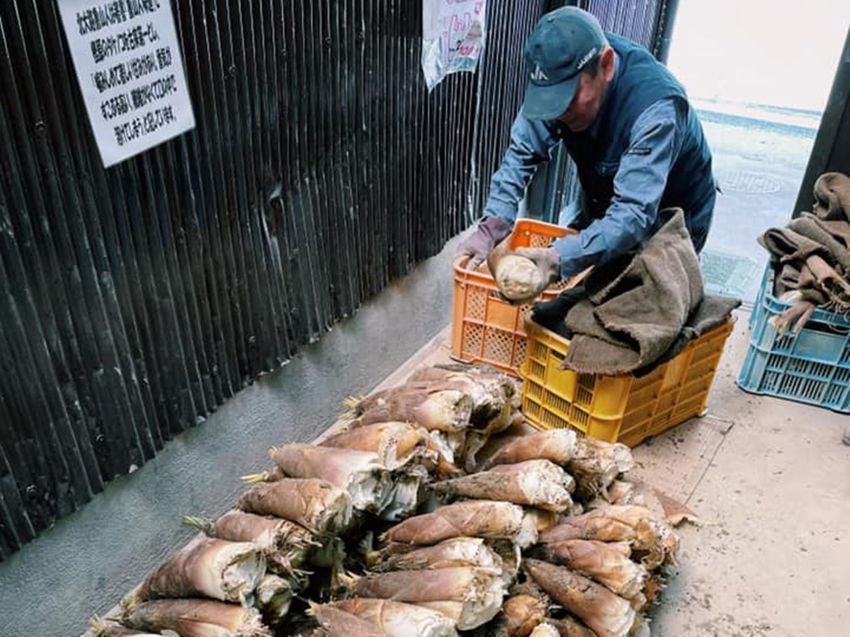京都・洛西地区塚原のタケノコ農家さんがタケノコを並べている写真
