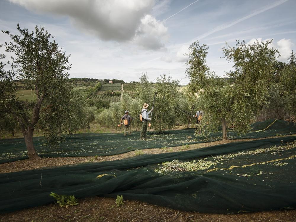 広大な農場で農作業をする人々