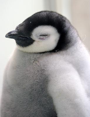 pppenguin